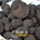 Bagnoli, inno al tartufo nei boschi di faggi e betulle del Laceno