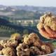 Nigro: «Sì al tavolo regionale per il tartufo»