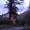 Bagnoli, il forte vento sradica albero che si abbatte su una casa
