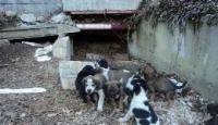 Laceno – Cani abbandonati, la denuncia degli animalisti