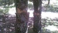 Bagnoli, dibattito acceso sulla raccolta del legname