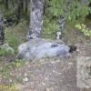 Bagnoli, carcasse di pecore abbandonate ai bordi della strada