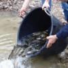Ripopolamento ittico del Lago Laceno: 800 kg di trote nel 2011