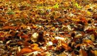 Raccolta castagne: è il peggiore anno degli ultimi 15