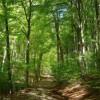 Gestione privata dei boschi: ancora un appello