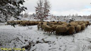 emergenza-neve-gegge-di-psotre-bagnolese-fancesco-dell-angelo