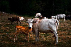 Laceno-Madre-natura-Foto-Zarrillo-Premio-internazionale-2017