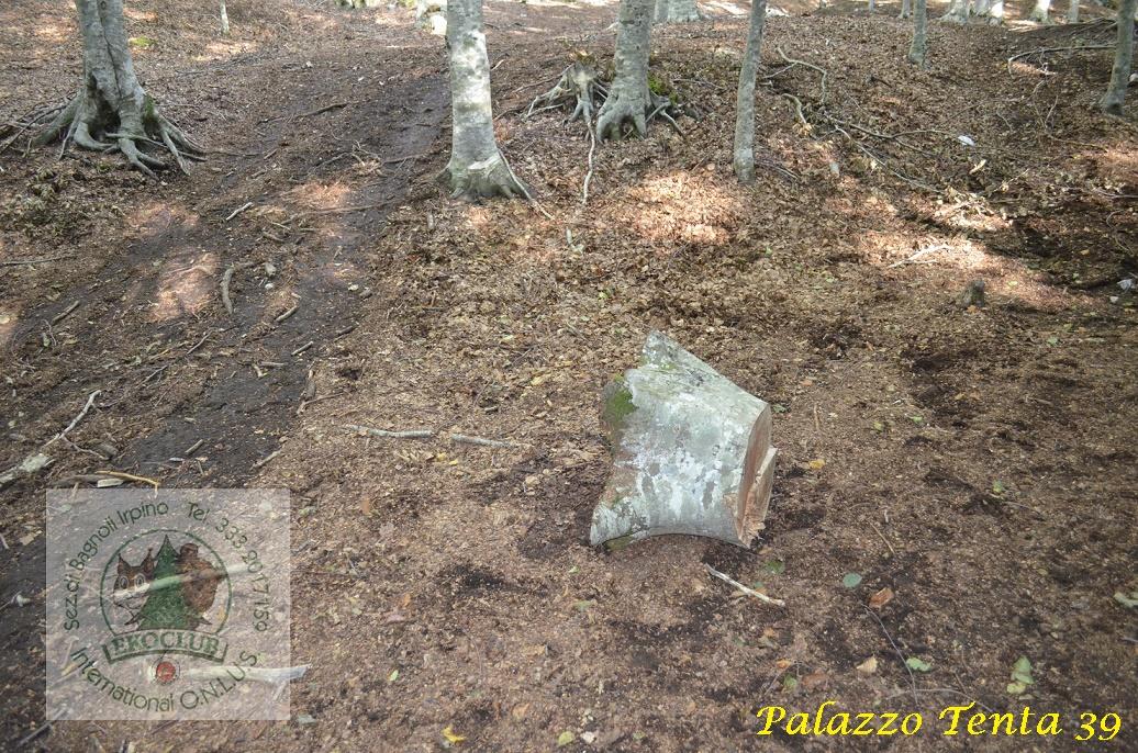 Laceno-PIano-Acerneso-taglio-abusivo-legna-15.09.2017-3