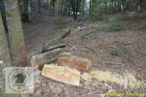 Laceno-tagli-abusivi-legna-giugno-2017-1