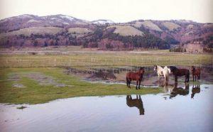 Lago-Laceno-cavalli