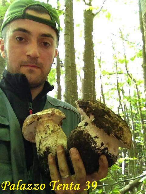 Lorenzo-Nicastro-fungo-gigante-2017-2