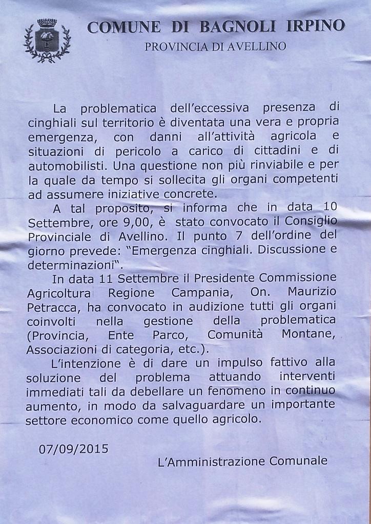 Manifesto-Comune-Cinghiali-settembre-2015
