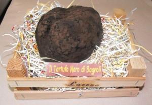 Tartufo nero di 530 gr. trovato a Bagnoli dal cane LUNA