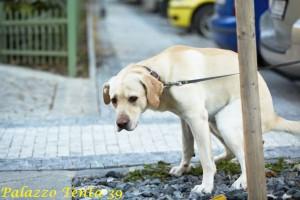 cane-intento-a-fare-i-suoi-bisogni-fisiologici