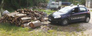 danneggiamento-boschivo-e-furto-laceno-giugno-2016