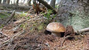 funghi-porcini-laceno