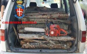 furto-di-legna-laceno