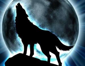lupo-solitario-2
