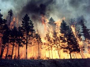 rischio-incendio-campania-estate-2015